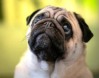 30 ways to start a Dog Business Online – Training videos